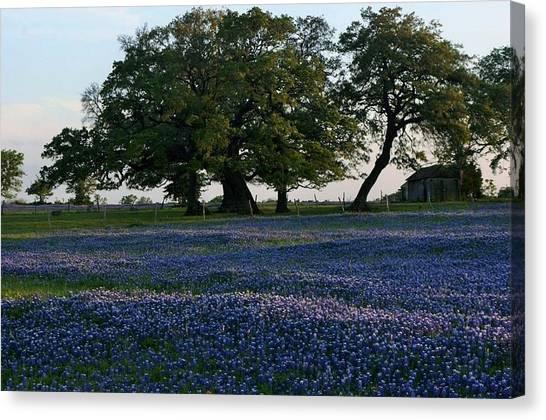 Texas Backroads Canvas Print