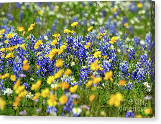 Texas Blue Bonnet  Canvas Print