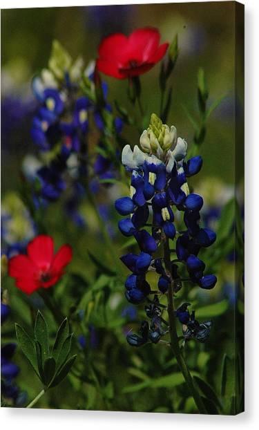 Texas Blue Bonnett Canvas Print