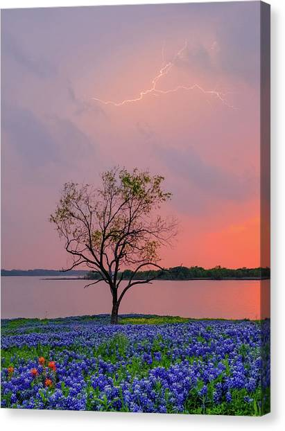 Texas Bluebonnets And Lightning Canvas Print