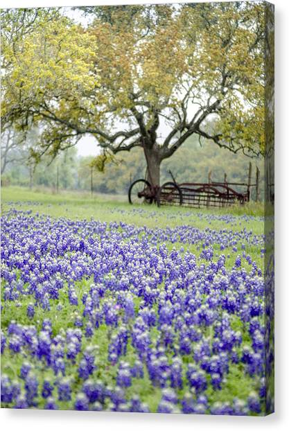 Texas Bluebonnets And Rust Canvas Print