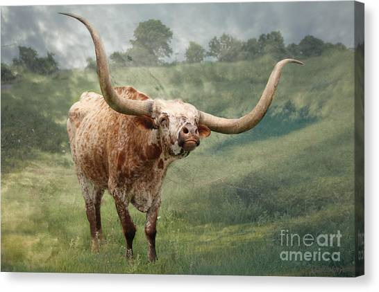Texas Longhorn - Pride Canvas Print