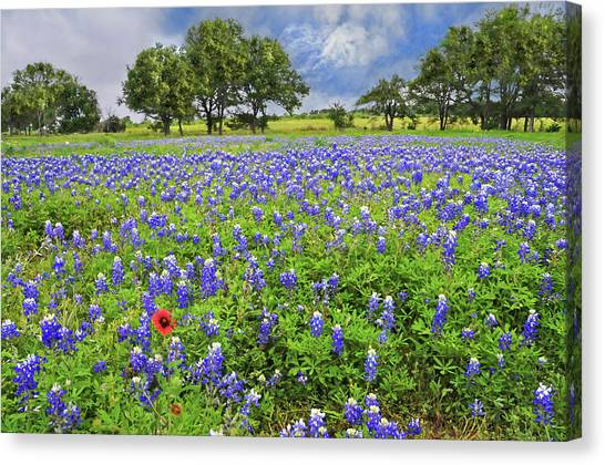 Austin Texas Canvas Print - Texas Spring  by Lynn Bauer
