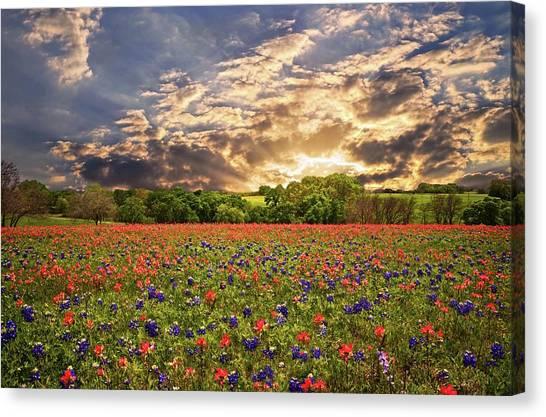 Texas Wildflowers Under Sunset Skies Canvas Print