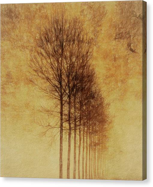 Creepy Canvas Print - Textured Eerie Trees by Dan Sproul