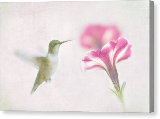 Textured Hummer Canvas Print