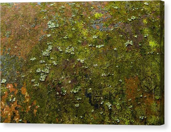 Randy Moss Canvas Print - Textured Landscape by Randy Walton