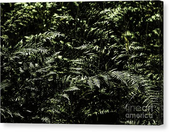 Tropical Plant Canvas Print - Textures Of A Rainforest by Jorgo Photography - Wall Art Gallery