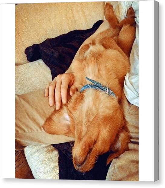 Golden Retrievers Canvas Print - Tgif by Stevy Olive