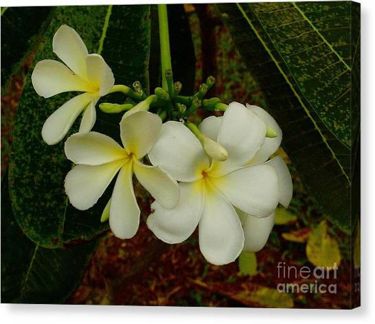 Thai Flowers II Canvas Print by Louise Fahy