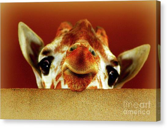 That Face Though Canvas Print