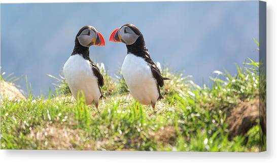 Puffins Canvas Print - That Moment When You Realize You Left Something Vital Behind  by Betsy Knapp