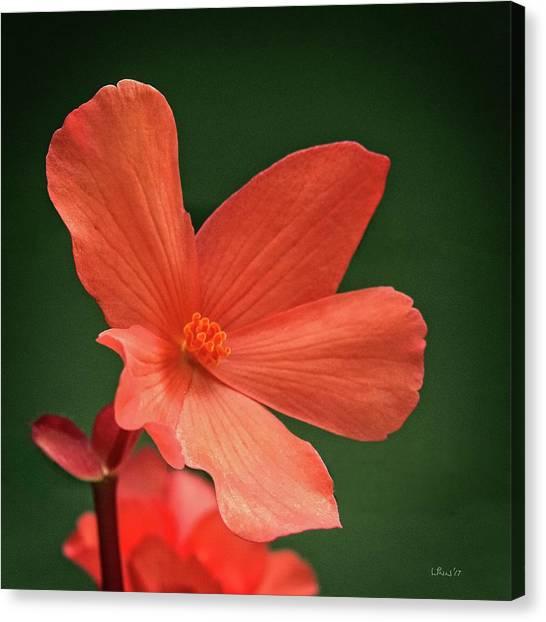 That Orange Flower Canvas Print