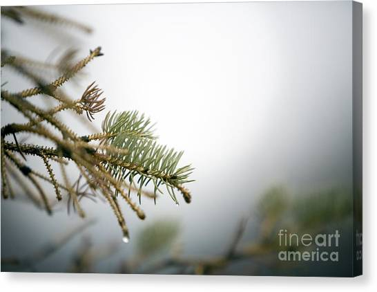 Canvas Print - Thaw by Jeannie Burleson