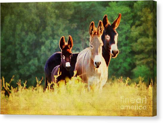 The A Family Canvas Print