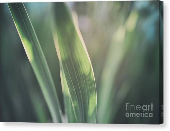 The Allotment Project - Sweetcorn Leaves Canvas Print