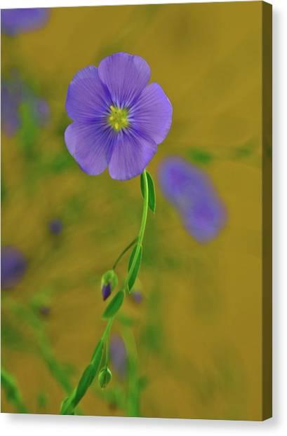 The Allure Canvas Print