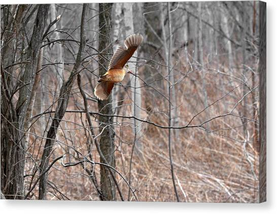 Woodcock Canvas Print - The American Woodcock In-flight by Asbed Iskedjian