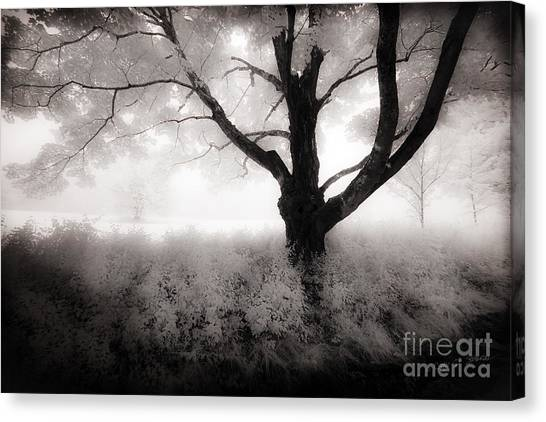 The Ancient Tree Canvas Print