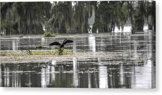 Loons Canvas Print - The Announcer  by Betsy Knapp