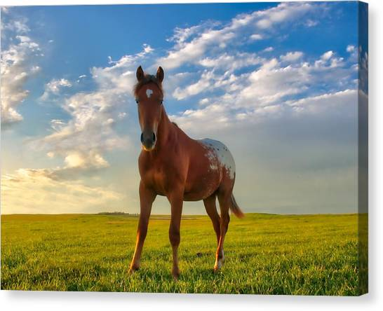 The Appy Canvas Print