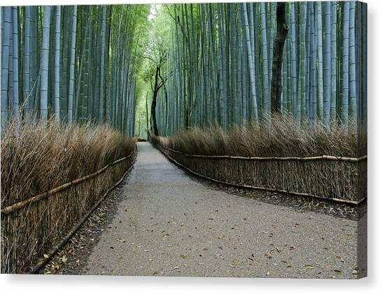 Sagano Bamboo Forest Canvas Print - The Arashiyama Bamboo Grove by Brian Kamprath