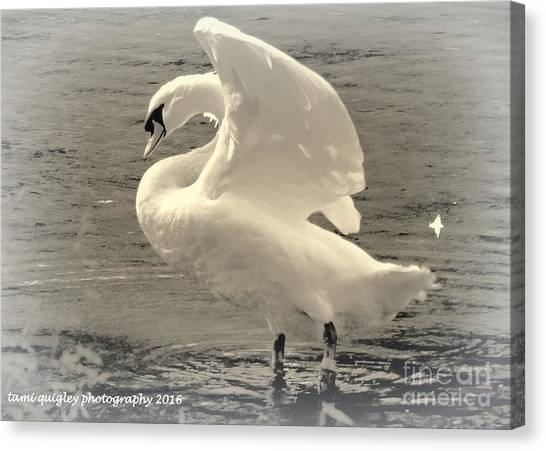 The Art Of The Swan  Canvas Print