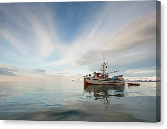 Auklets Canvas Print - The Auklet by Ted Raynor