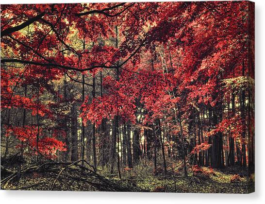 The Autumn Colors Canvas Print