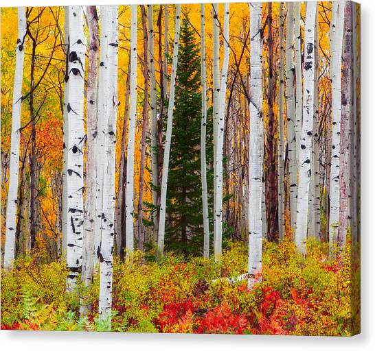 The Autumn Forest Canvas Print
