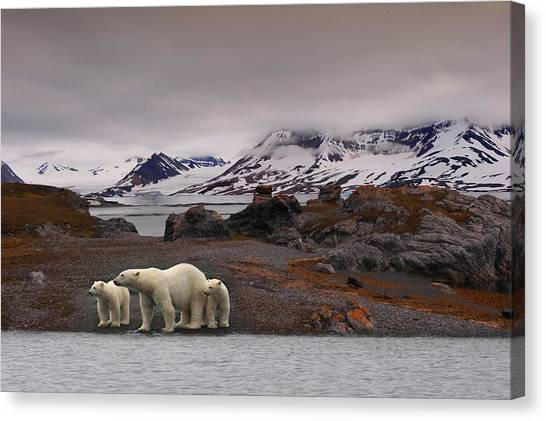 Polar Bears Canvas Print - The Autumn Of The North by Mathilde Collot
