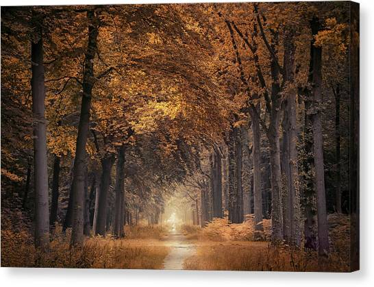 Orange Tree Canvas Print - The Autumn Walk by Rob Visser