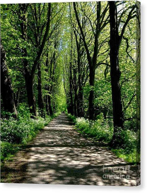 The Avenue Of Limes At Mill Park 3 Canvas Print