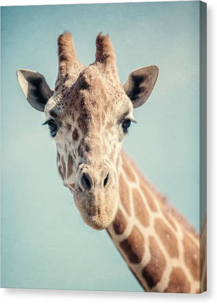 Giraffes Canvas Print - The Baby Giraffe by Lisa Russo