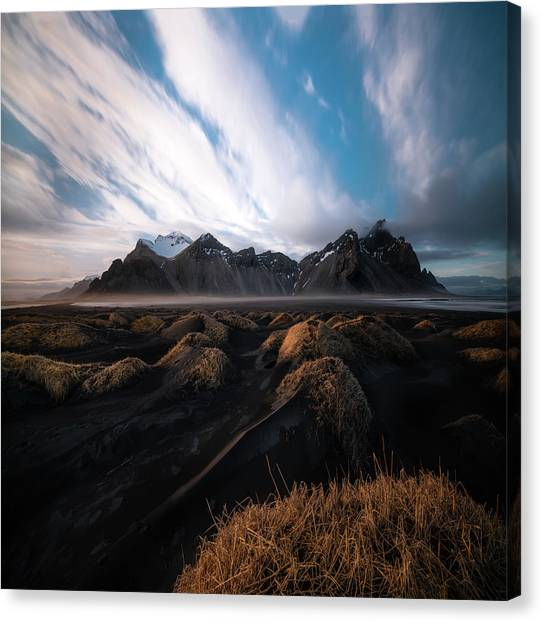 Reindeer Canvas Print - the Beauty of Iceland by Larry Marshall