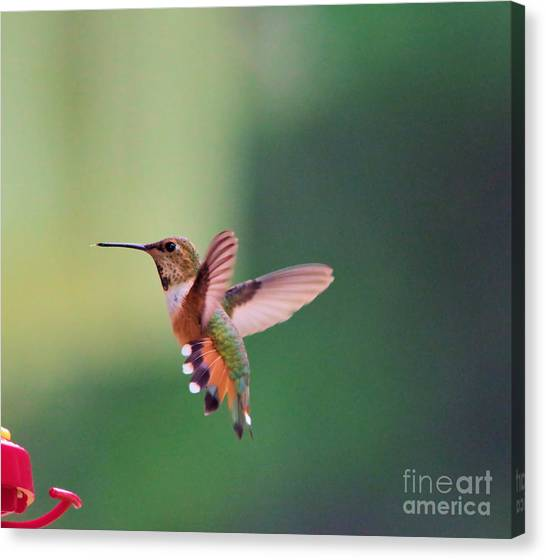 Little Things Canvas Print - The Beginning Of A Turn  by Jeff Swan