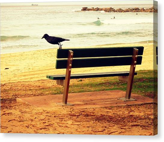 The Bench And The Blackbird Canvas Print