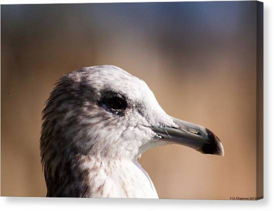 The Best Side Of The Gull Canvas Print