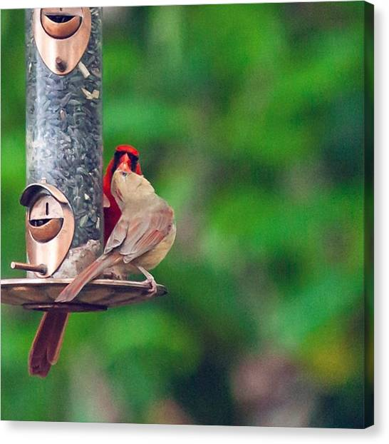Lovebirds Canvas Print - the Best Thing To Hold Onto In Life by Cassandra M Photographer