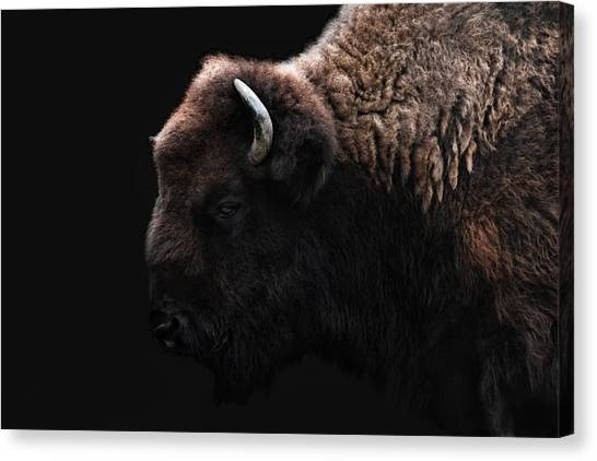 Bison Canvas Print - The Bison by Joachim G Pinkawa