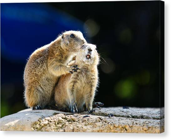 Groundhogs Canvas Print - The Bite by Edward Myers