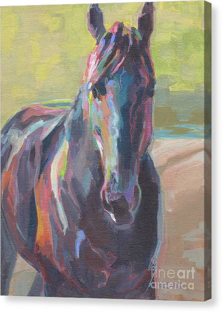 Black Stallion Canvas Print - The Black by Kimberly Santini