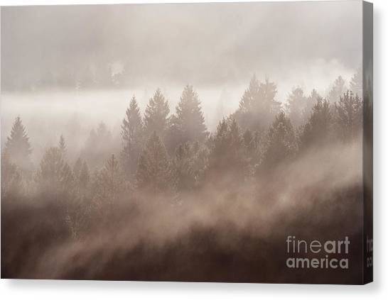 Tree Canvas Print - The Blow Of The Forest by Yuri Santin