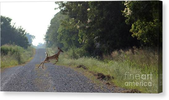 Missouri Whitetail Canvas Print - The Blue Blazes Jump And Run by Tammy Miller