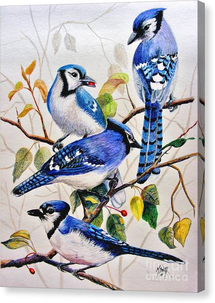 Bluejays Canvas Print - The Blues by Marilyn Smith