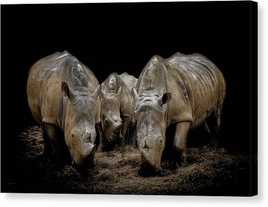 Rhinos Canvas Print - The Bond by Paul Neville