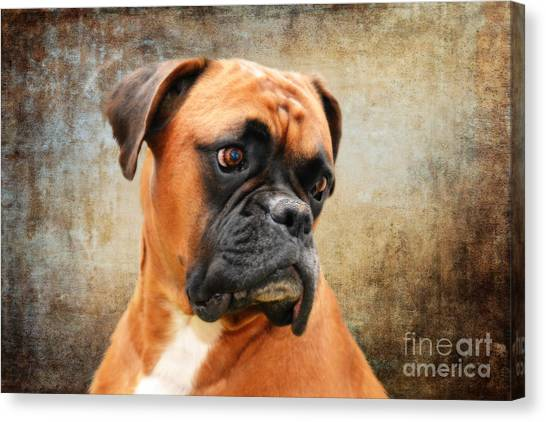 Boxers Canvas Print - The Boxer by Smart Aviation