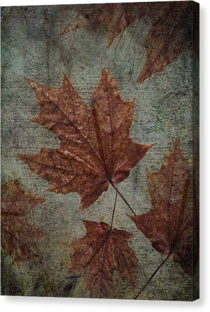 The Bronzing Canvas Print