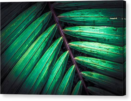 The Brush Strokes Canvas Print