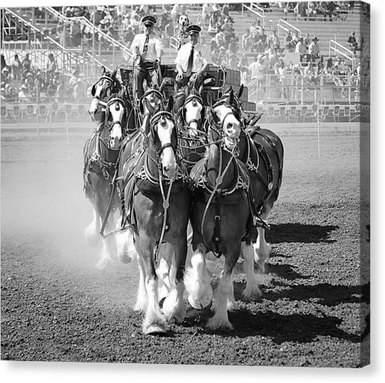 The Budweiser Clydesdales Canvas Print